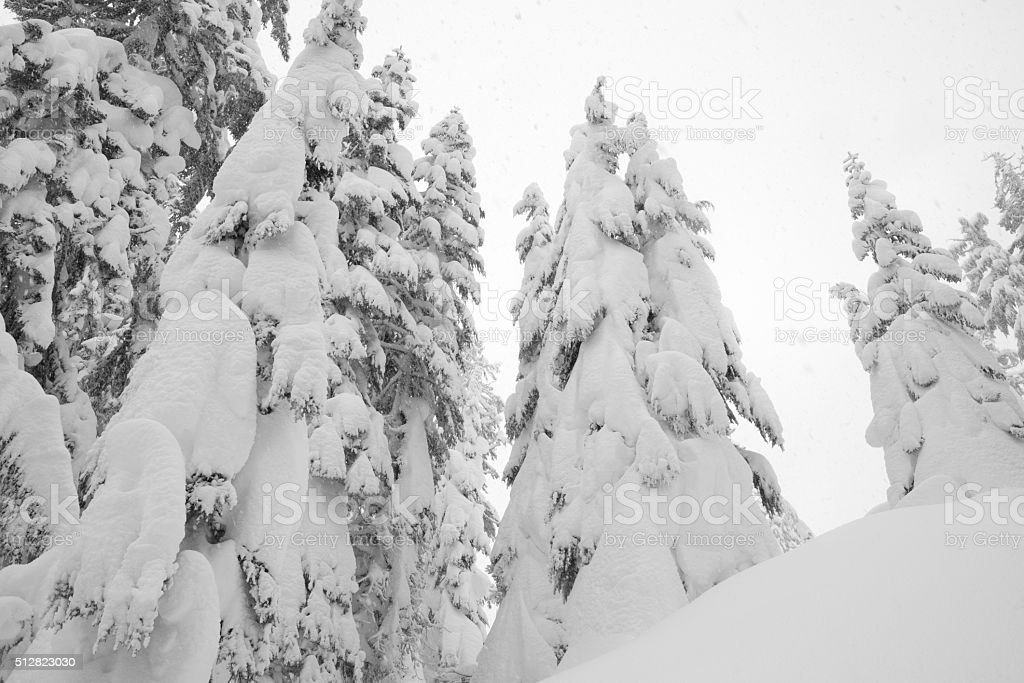 Snowing in Winter Wonderland - Royalty-free Cold Temperature Stock Photo