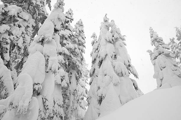 Snowing in Winter Wonderland stock photo