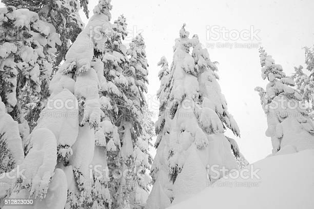Snowing In Winter Wonderland Stock Photo - Download Image Now