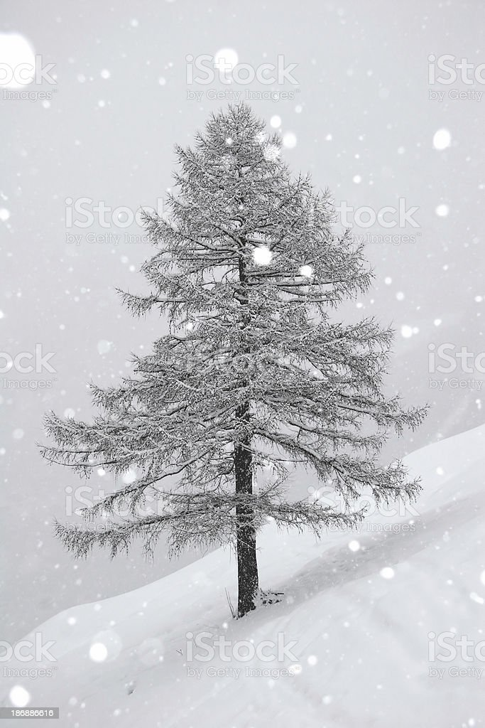 Snowing. royalty-free stock photo