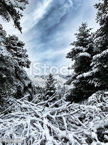 istock Snowing trees 1076844270