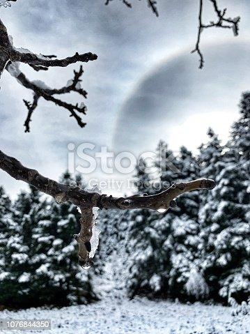 istock Snowing trees 1076844350