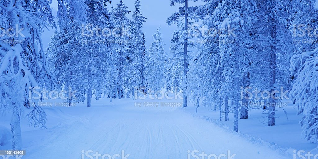 Snowmobile track through frozen forest in Finnish Lapland at dusk royalty-free stock photo