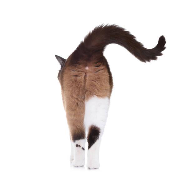 snösko katt gå bort - bum bildbanksfoton och bilder