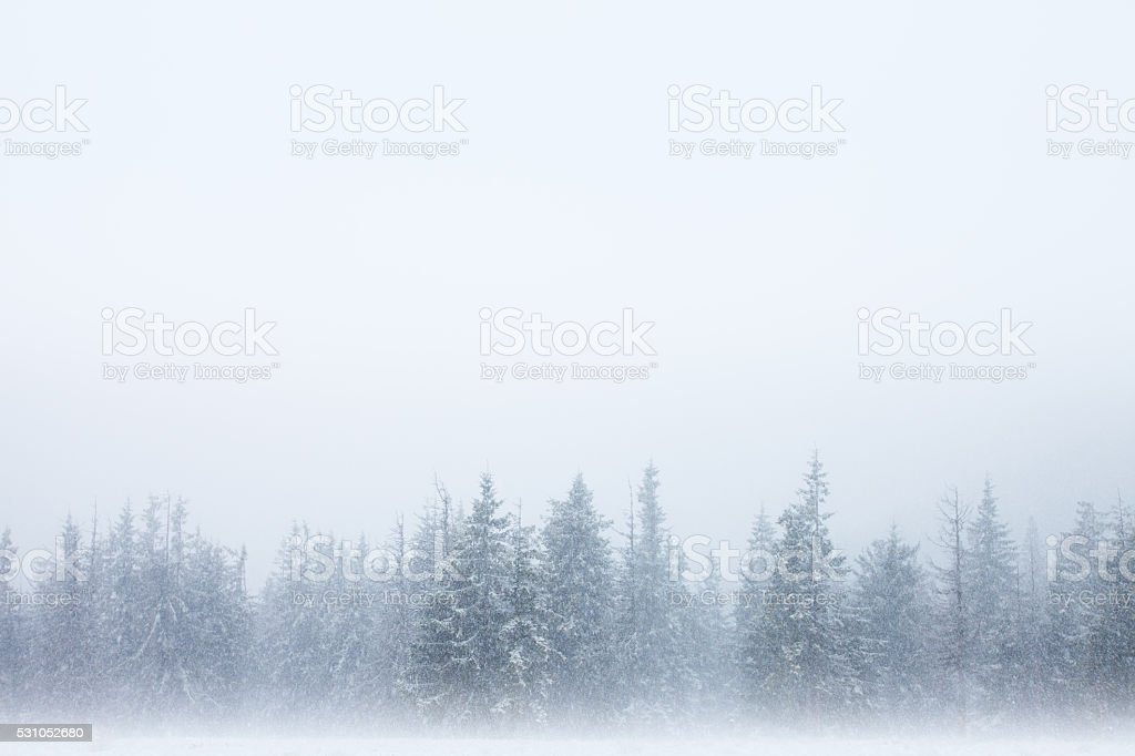 Snowstorm forest background stock photo