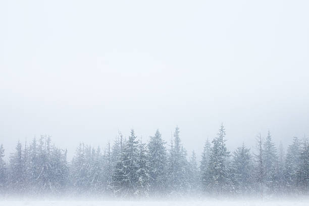 snowstorm forest background - trees in mist stock pictures, royalty-free photos & images