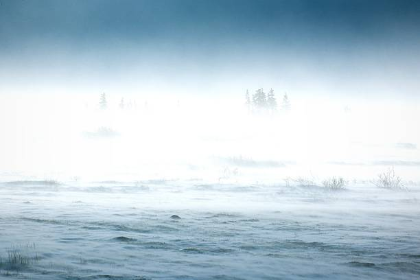 吹雪ツンドラの景観をご用意しています。 - ツンドラ ストックフォトと画像