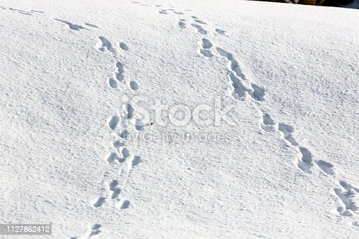 Remains of footstep in snow from animals, dividing and split ways