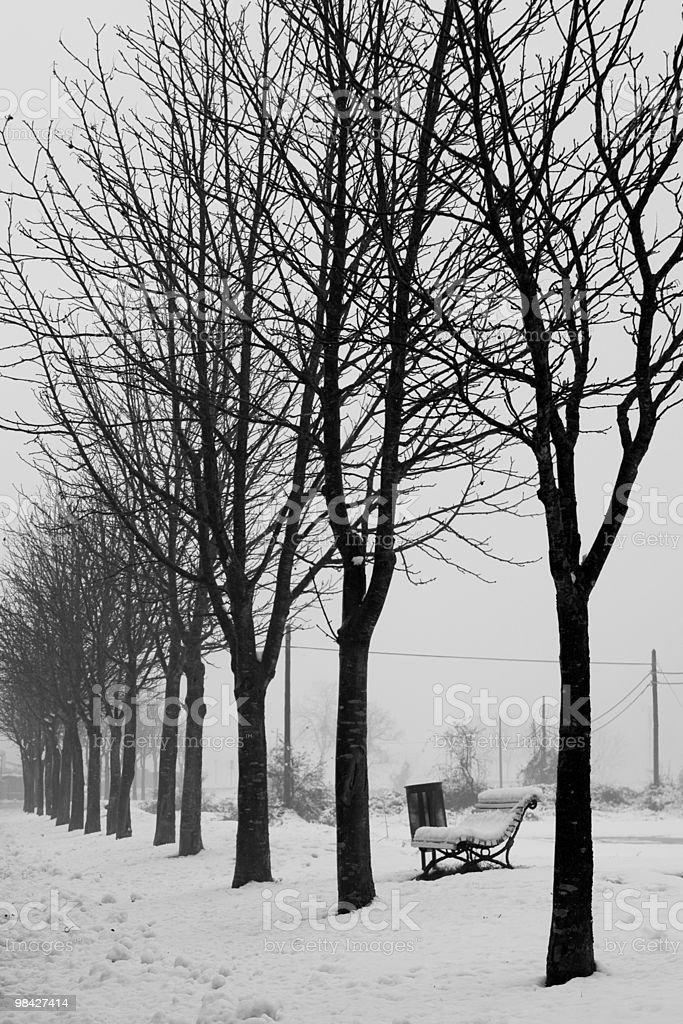 Snowy Avenue royalty-free stock photo