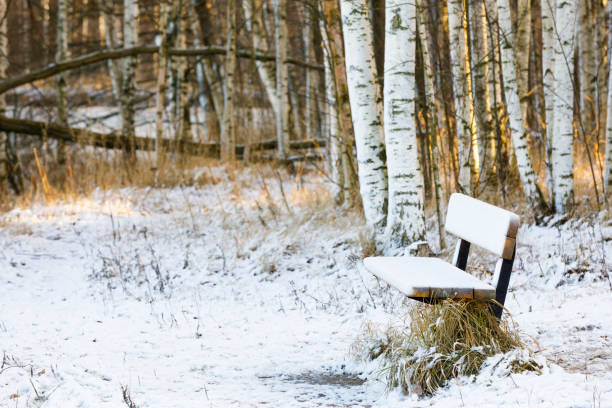 Snowy bench in a forest at winter stock photo