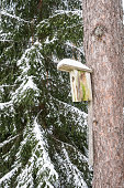 Snowy bird house on a pine tree. Wooden aviary of timber. Nest box in the forest, natural winter background pattern