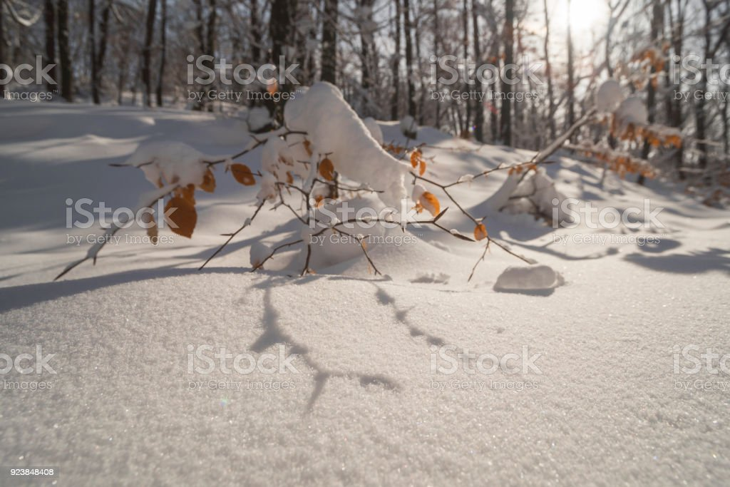 snowy branch stock photo