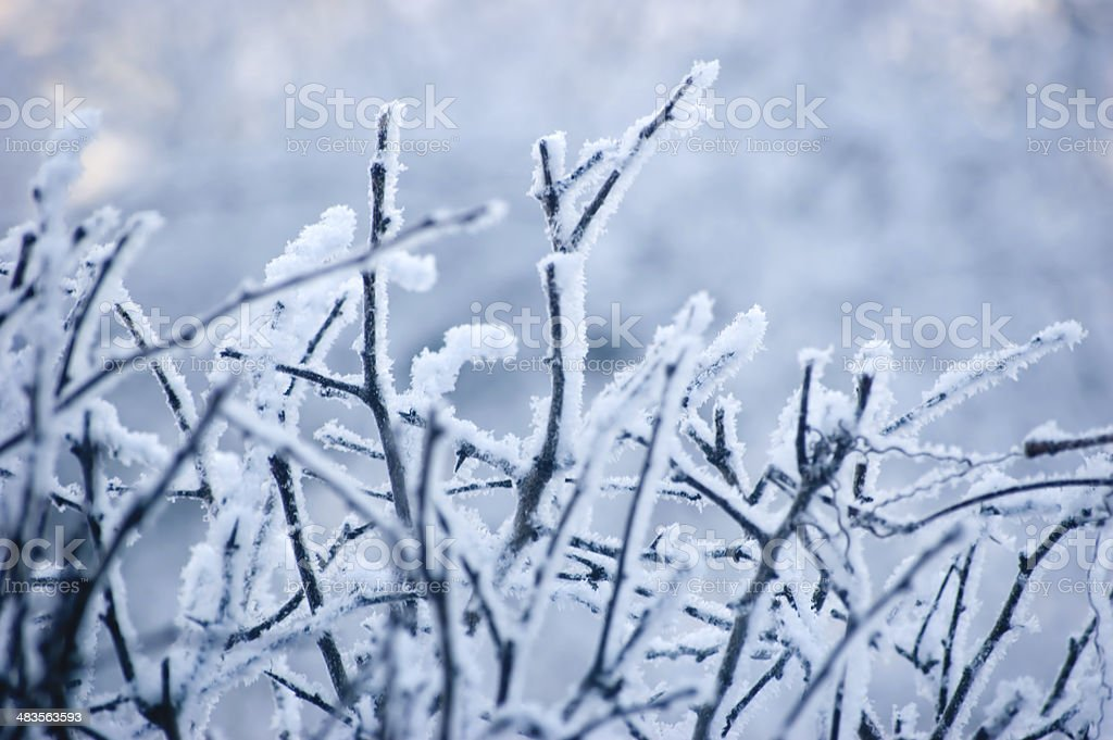 Snowy Branches Blue, gentle bokeh, large detailed snow twig closeup stock photo