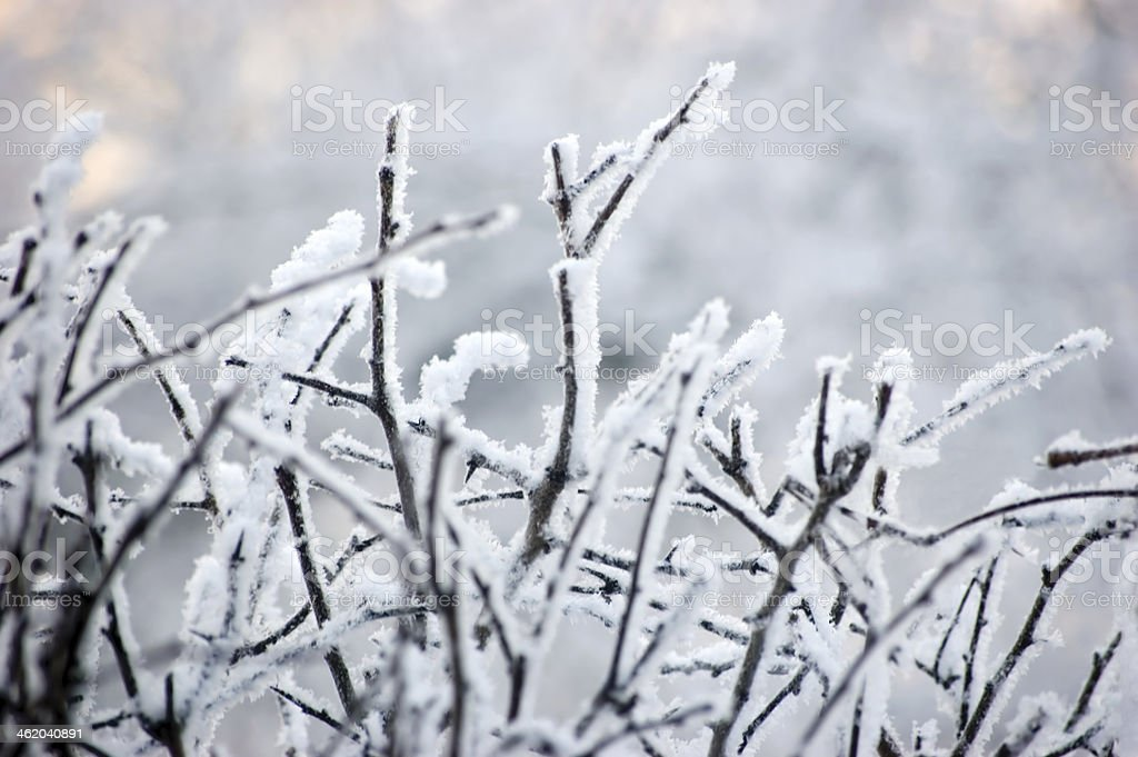 Snowy Branches Closeup, Gentle Bokeh Background stock photo