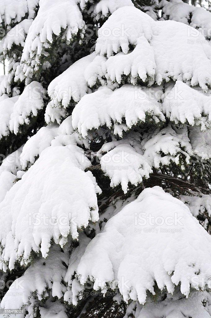 Snowy Zweige – Foto