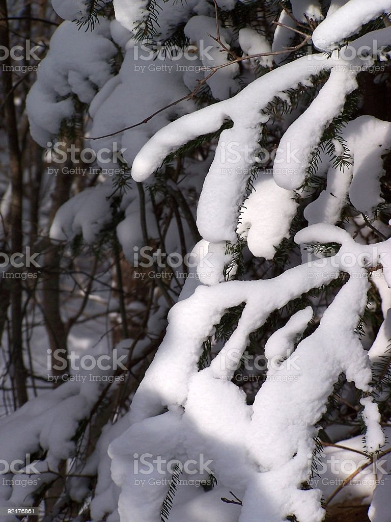 Snowy Branches royalty-free stock photo