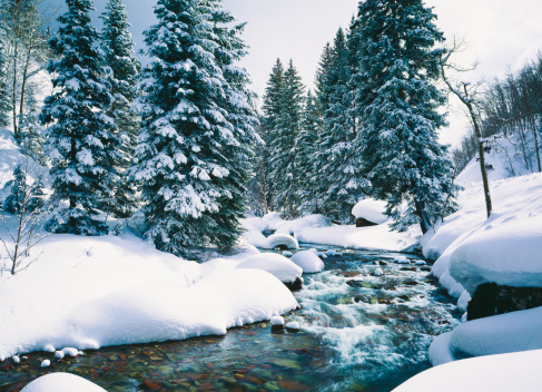 Fresh Winter Snow Covers Forest Along Cascade Creek At Lake Tahoe,Calif.