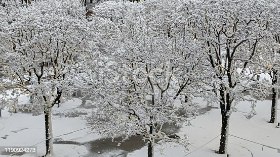 614958148 istock photo Snowy Christmas day with lights on the trees 1190924273