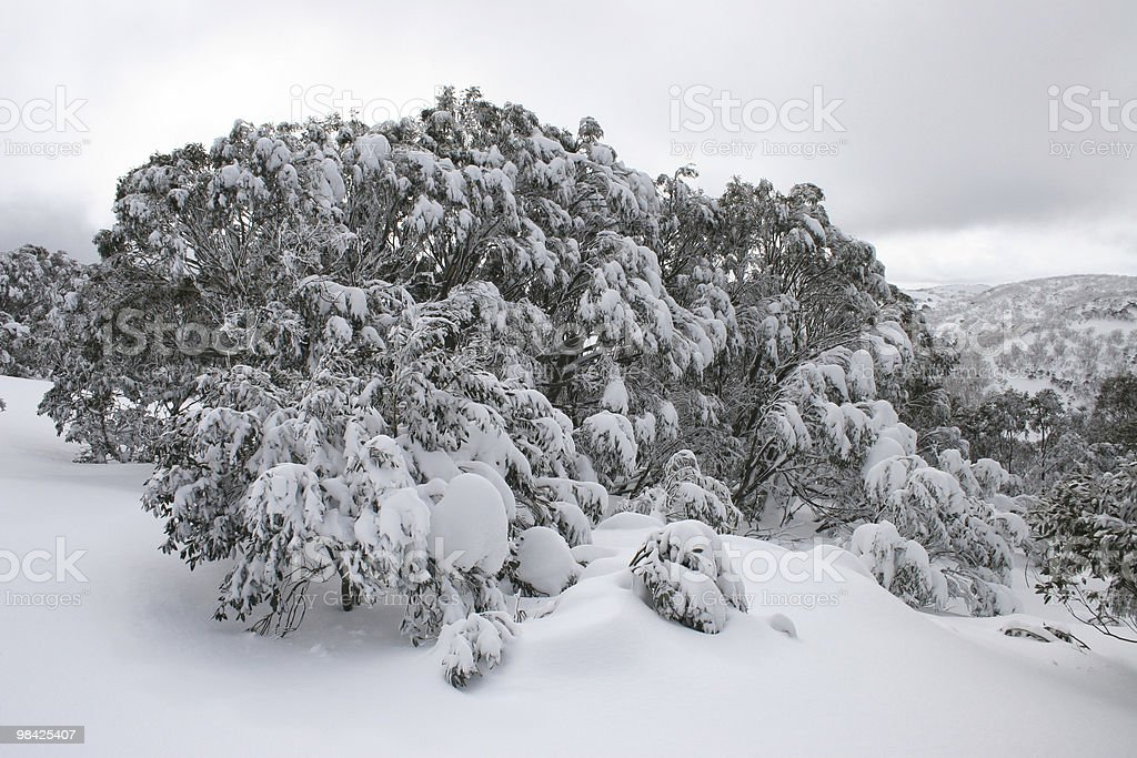 Snowy Day in the Mountains royalty-free stock photo