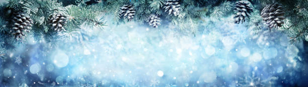 Snowy Fir Branches With Snowfall stock photo