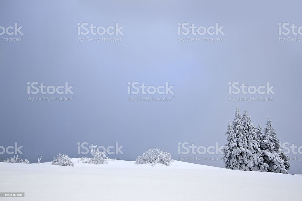 snowy fir tree in summit of middle range mountain royalty-free stock photo