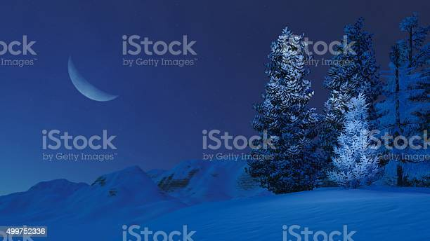 Photo of Snowy firs on mountain top at moonlight night