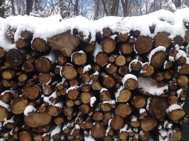 verschneiten wald, bäume, schwarz / weiß foto - kanada rundreise stock-fotos und bilder