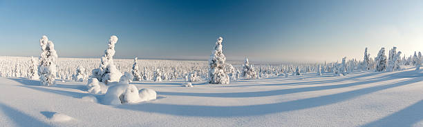 Snowy forest in Lapland, Finland stock photo
