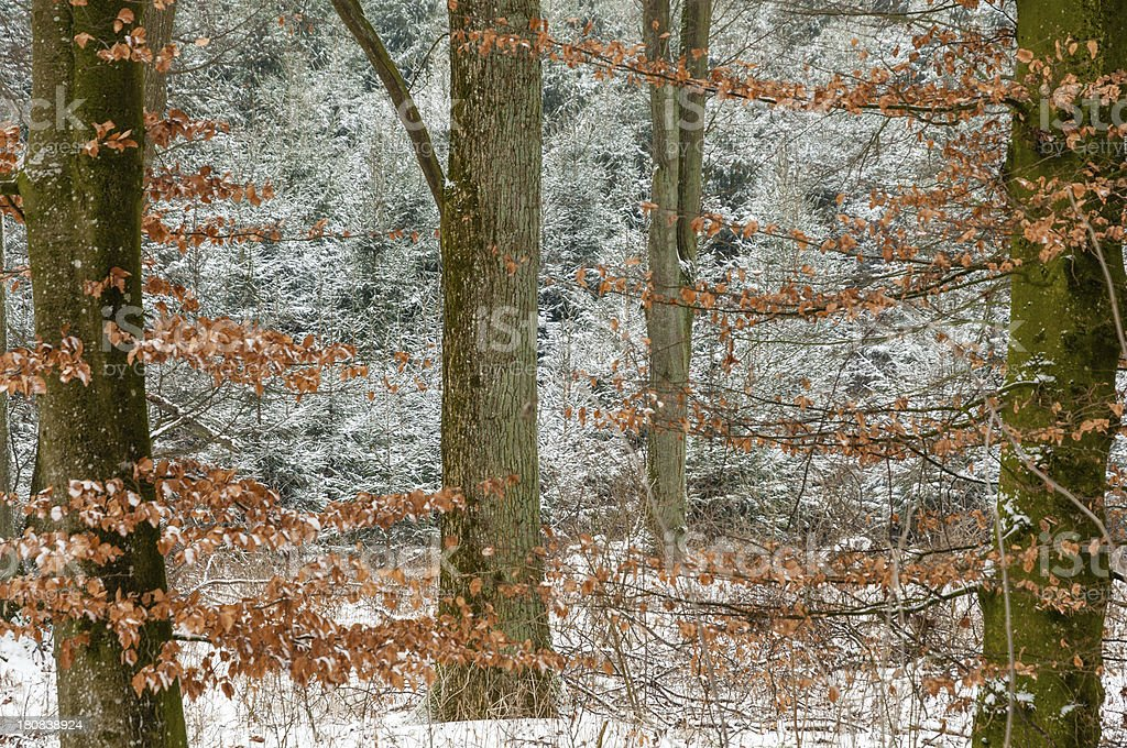 Snowy forest in southern Germany royalty-free stock photo