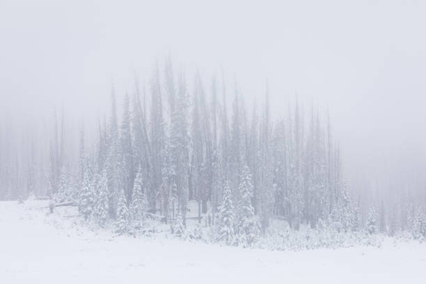 Snowy forest landscape with fog stock photo