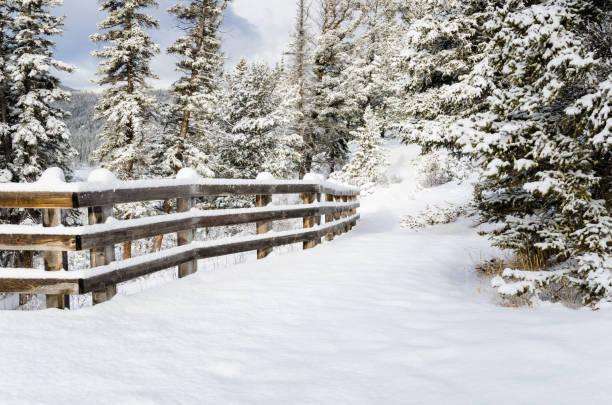 Snowy forest path lined with a fence picture id868537082?b=1&k=6&m=868537082&s=612x612&w=0&h=h59b5dkokcxd7cg3unbdze2waptfqcgbcxljbwozzn0=