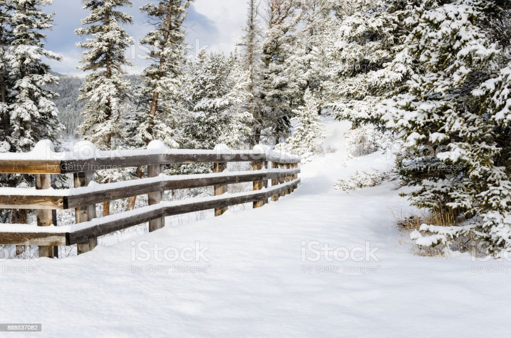 Snowy Forest Path Lined with a Fence stock photo