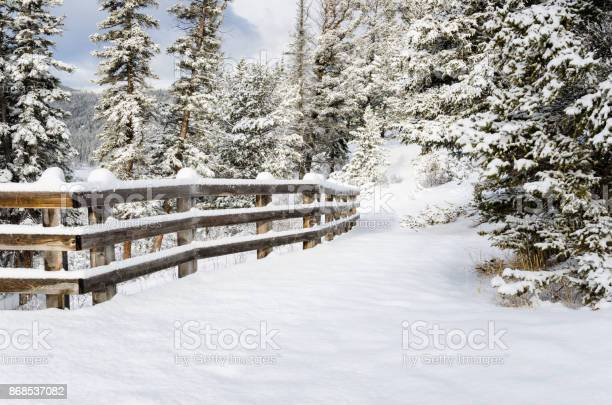 Photo of Snowy Forest Path Lined with a Fence
