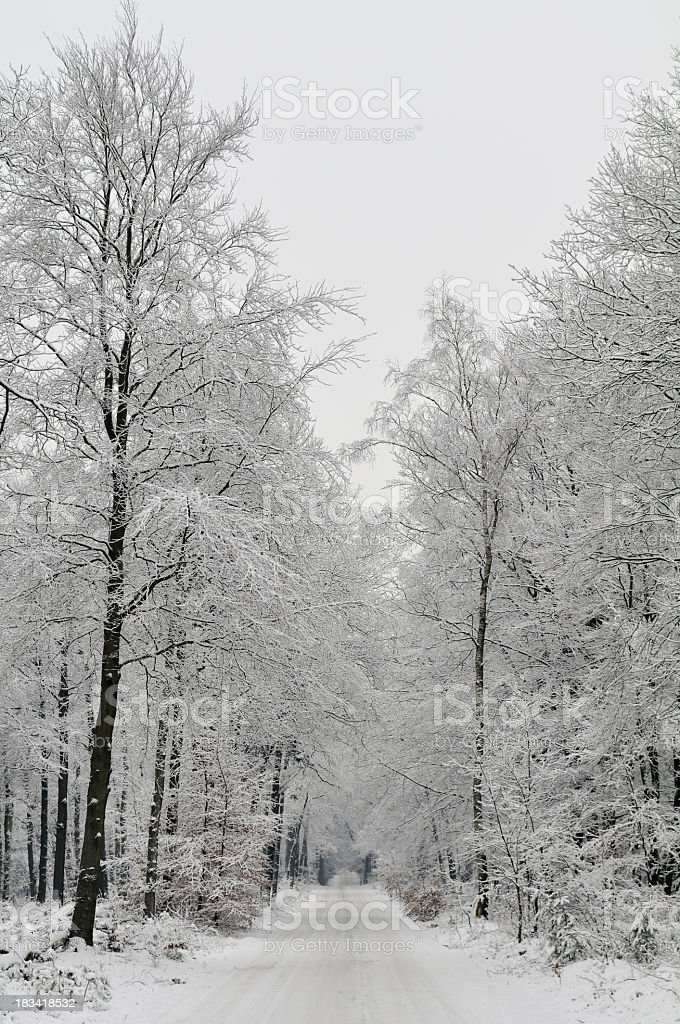 Snowy forest path stock photo