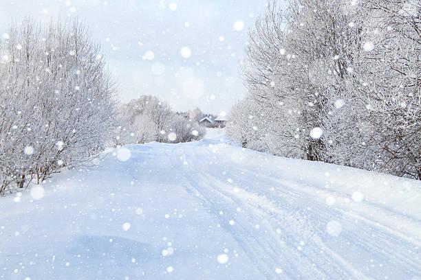 スノーイー森 - 雪景色 ストックフォトと画像