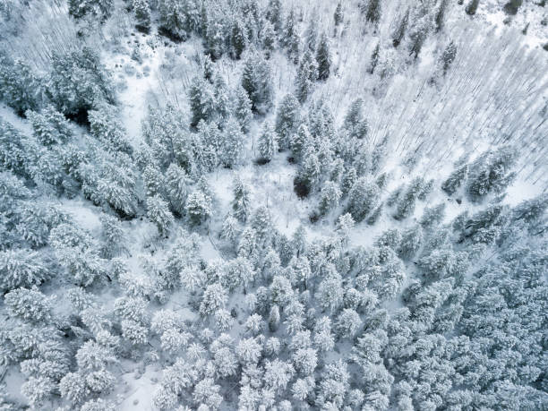 Snowy Frosted Trees Fresh Snow Winter Landscape Aerial Snowy Frosted Trees Fresh Snow Winter Landscape Aerial - Beautiful landscape just after a snow storm. minturn colorado stock pictures, royalty-free photos & images