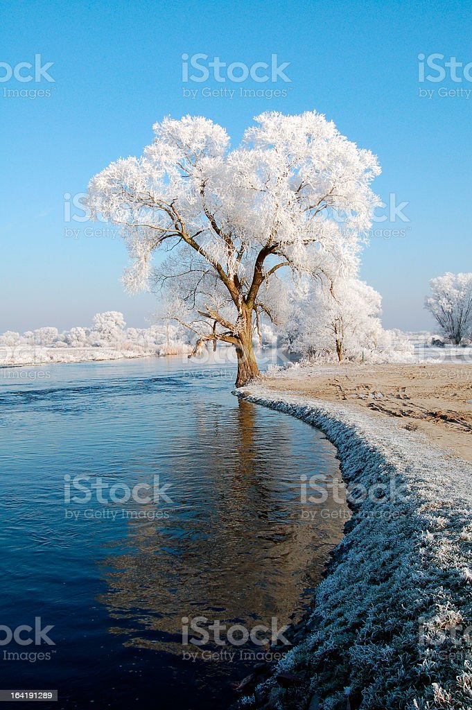 snowy Havel River with willow tree (Germany) stock photo