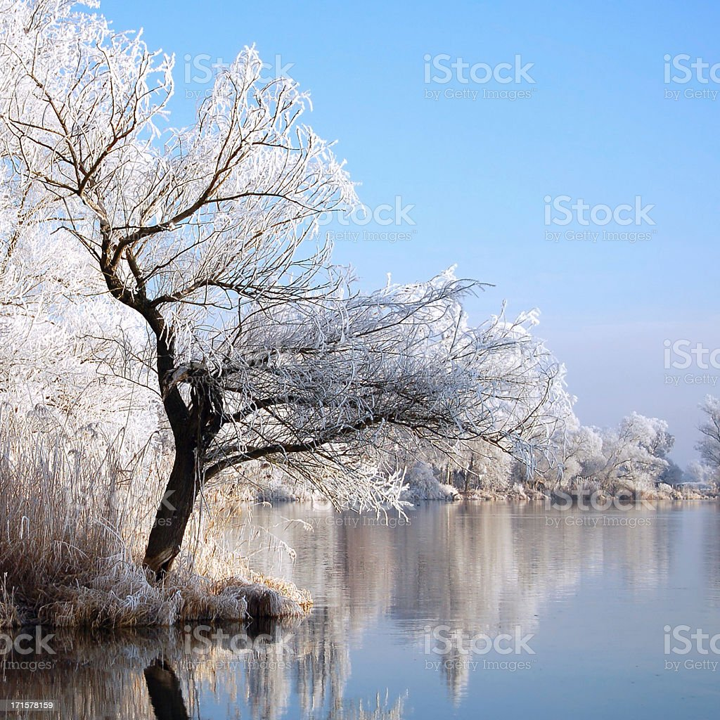 snowy Havel River with willow tree (Brandenburg Germany) stock photo