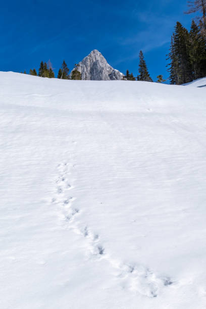 Snowy hill with animal footprints in Kaiserau with mountain Admonter Kalbling – Foto