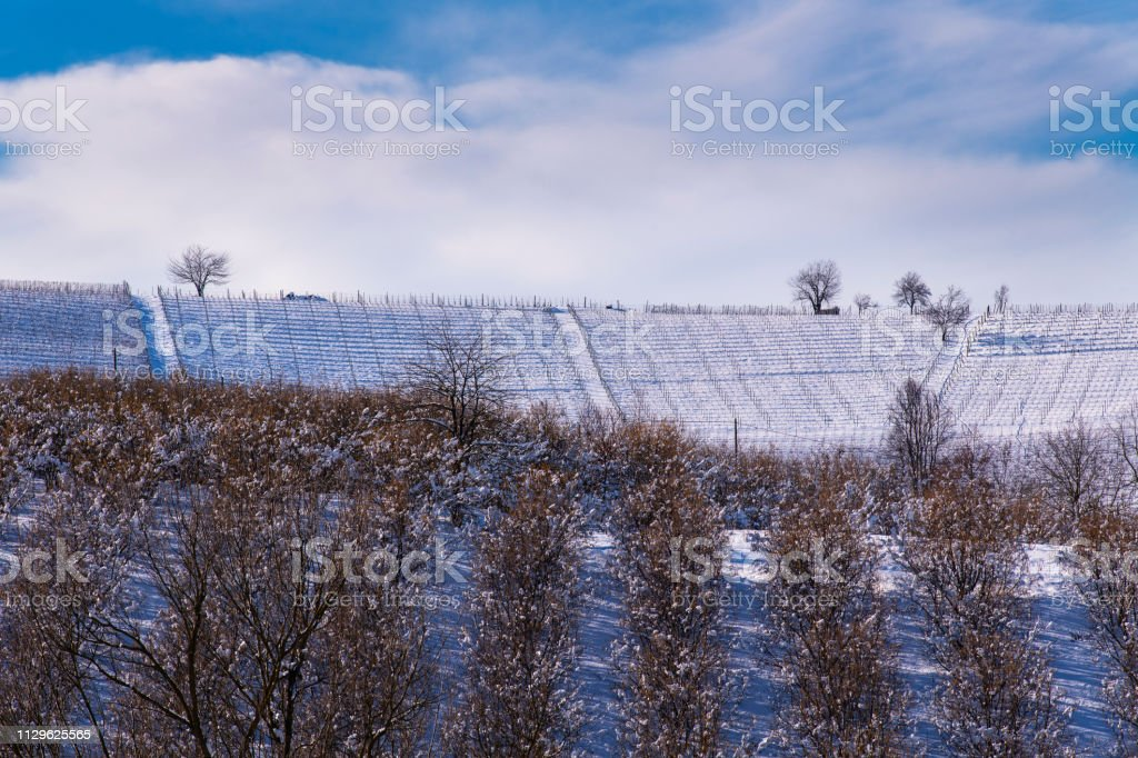 Snowy hilly landscape among vineyards and hazel groves - foto stock