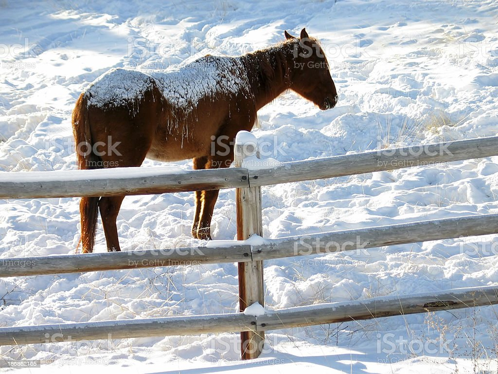 Snowy Horse stock photo