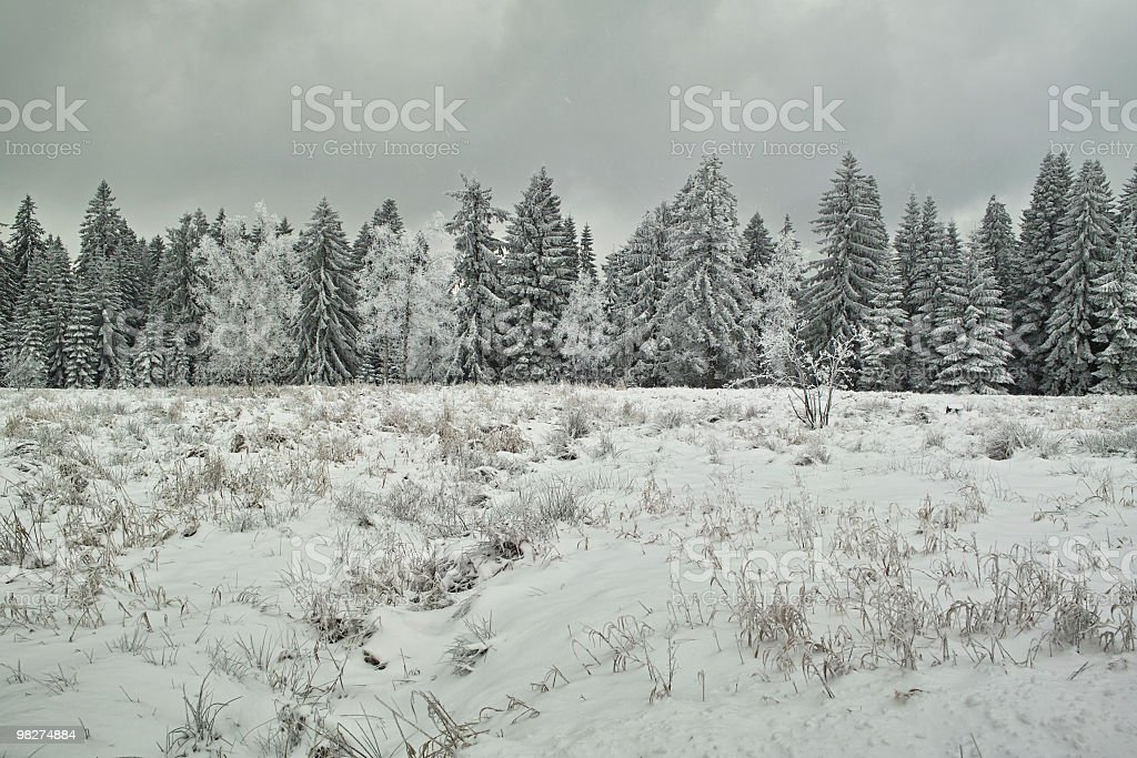 snowy landscape on cold and windy day royalty-free stock photo