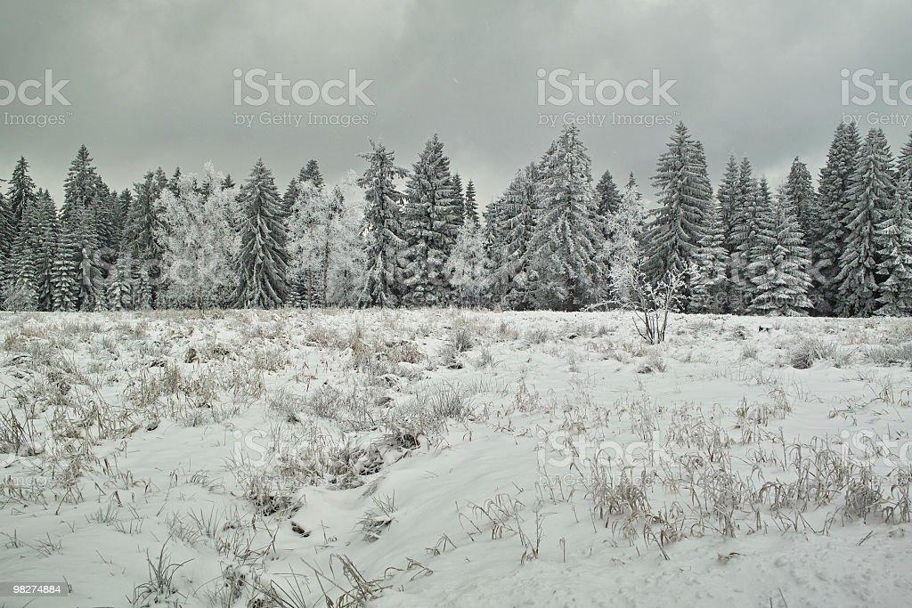 Paesaggio di neve di vento e freddo giorno foto stock royalty-free