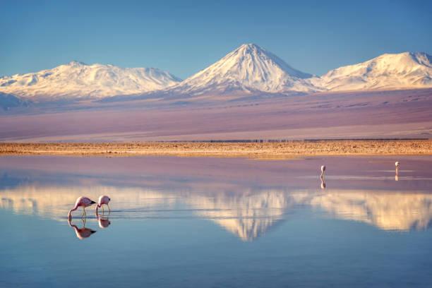 Verschneiten Licancabur Vulkan in den Anden Montains reflektieren die Wate der Laguna Chaxa mit Anden Flamingos, salar, Atacama, Chile – Foto