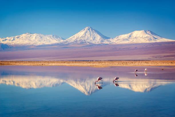 Schneeiger Vulkan Licancabur in den Anden, reflektiert im Watt der Laguna Chaxa mit Andenflamingos, Atacama salar, Chile – Foto