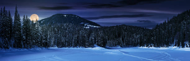 snowy meadow in winter spruce forest at night stock photo