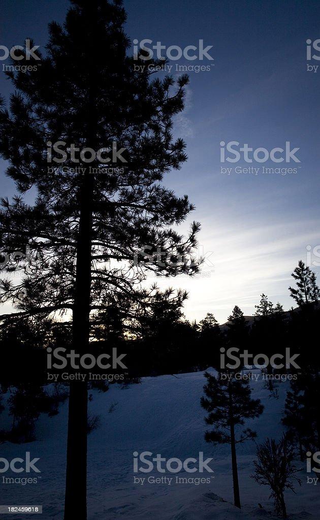 Nívea por la mañana foto de stock libre de derechos