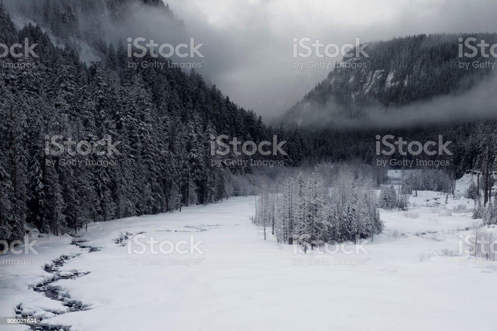 Snowy Morning stock photo