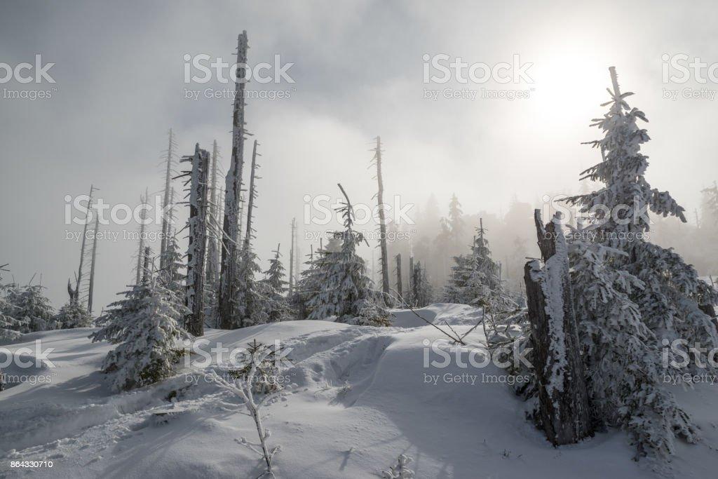 Snowy mountain Dreisessel in the Bavarian Forest stock photo