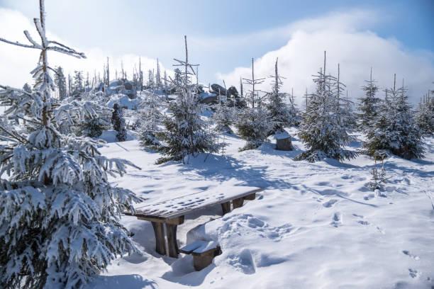 snötäckta berg dreisessel i den bayerska skogen - bayerischer wald bildbanksfoton och bilder